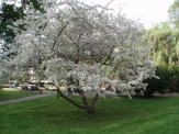 Foto měsíce května 2012
