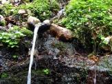 Kneippovy lesní lázně