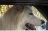 Druhý ročník psího stopařského závodu