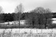 Zima u rybníka Olešná
